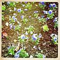 Flowers in paris.jpg