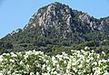 Flowers with Mountain Backdrop - Soller - Mallorca - Spain (14334182049).jpg