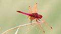 "Flyin"" insect.jpg"