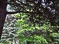 Foliage outside Old Courthouse - Odorikoen - Sapporo - Hokkaido - Japan (47971087897).jpg