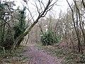 Footpath in woodland - geograph.org.uk - 1722167.jpg
