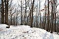 Forêt départementale de Beauplan sous la neige 2012 33.jpg