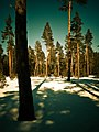 Forêt de la Matte par Lionel Maraval.jpg