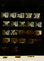 Ford B1064 NLGRF photo contact sheet (1976-08-15)(Gerald Ford Library).jpg
