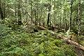 Forest in Yatsugatake 37.jpg