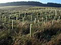 Forest of Tuley tubes, the Changue - geograph.org.uk - 263346.jpg