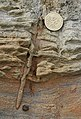 Fossil Root - geograph.org.uk - 938504.jpg