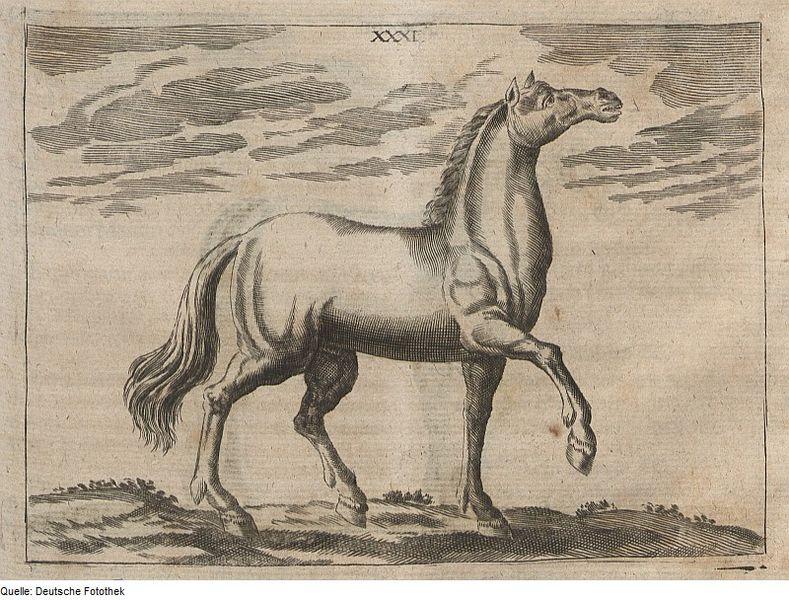 File:Fotothek df tg 0005647 Nutztierhaltung ^ Tiermedizin ^ Pferd ^ Krankheit.jpg