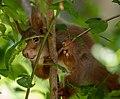 Frankfurter Grüngürtel Eichhörnchen.jpg