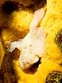 FrogFishJI1.jpg
