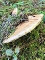 Fungi - Daniel Boone National Forest - Social 02.jpg