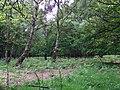 GOC Berkhamsted & Frithsden 020 Ashridge Estate (28413939756).jpg
