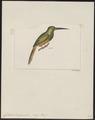 Galbula tombacea - 1820-1863 - Print - Iconographia Zoologica - Special Collections University of Amsterdam - UBA01 IZ16800371.tif
