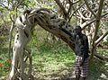 Gambia & Senegal 2009 (3687538460).jpg