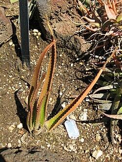 Gardenology-IMG 5364 hunt10mar.jpg