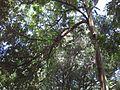 Gardenology.org-IMG 0712 rbgs10dec.jpg