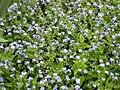 Gardenology.org-IMG 5288 hunt0904.jpg