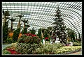 Gardens by the Marina Bay - Dome Flowers-12 (8323801342).jpg