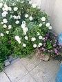 Gardens in Baghdad 60.jpg
