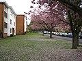 Garrard Gardens, Sutton Coldfield - geograph.org.uk - 1859195.jpg
