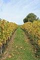 Geneva Countryside in Autumn - panoramio (58).jpg