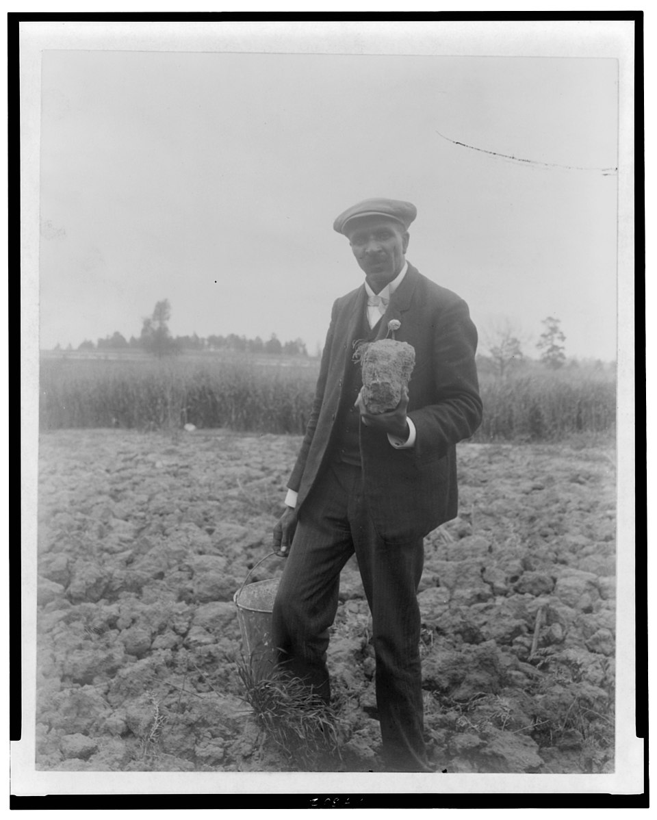 George Washington Carver, full-length portrait, standing in field, probably at Tuskegee, holding piece of soil