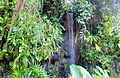 Gfp-climatron-waterfall-st-louis-botanical-gardens.jpg