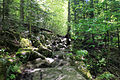 Gfp-new-york-adirondack-mountains-more-trail.jpg