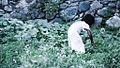 Girl in the Field (7664363766).jpg