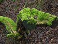 Glasowbachniederung Selchower-See 609.jpg