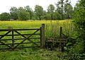 Go To Bed Meadow - geograph.org.uk - 1292472.jpg