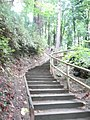 Going to Wreck Beach stairs from NW marine dr. Vancouver BC - panoramio.jpg