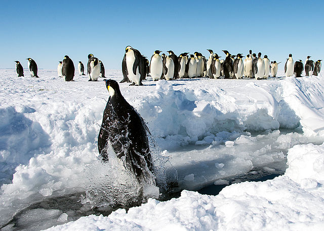 https://upload.wikimedia.org/wikipedia/commons/thumb/8/81/Gould_Bay%2C_Antarctica_%2811280221316%29.jpg/640px-Gould_Bay%2C_Antarctica_%2811280221316%29.jpg