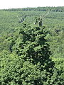 Grünes Meer Himmelsleiter Blick 17.JPG