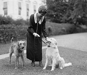 United States presidential pets -  Grace Coolidge with Laddie Boy, an Airedale Terrier, and Rob Roy, a white Collie