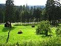 Grass - panoramio.jpg