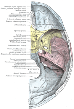 Optic Canal Wikipedia
