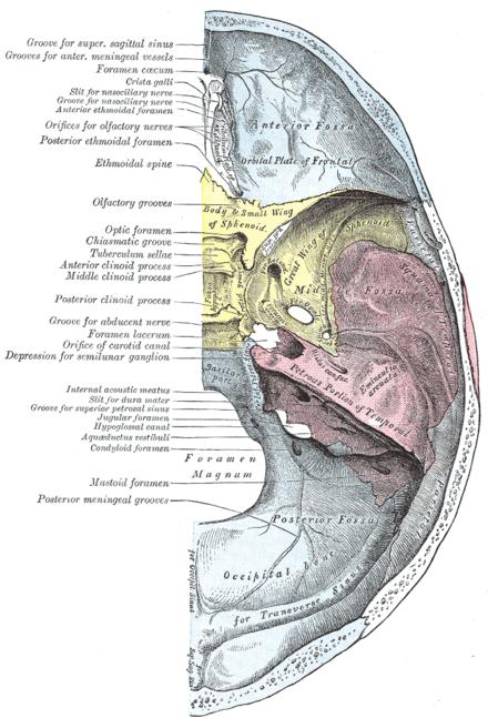 Peñasco (anatomía) - Wikiwand