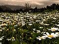 Greek Spring (143771651).jpeg