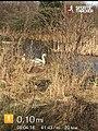 Greenhead Moss Community Nature Park - panoramio (6).jpg