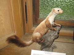 Gressoney-Saint-Jean-Museo-IMG 1815.JPG