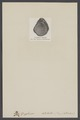 Gryphaea dilatata - - Print - Iconographia Zoologica - Special Collections University of Amsterdam - UBAINV0274 005 07 0008.tif