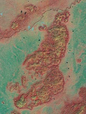 False-color image of a bajo (lowland area) in ...