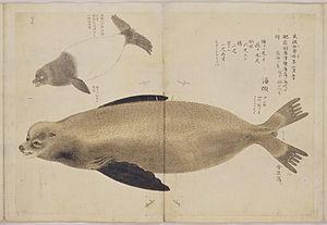 Hasegawa Settan - Drawing of a seal that washed up on a beach near Karatsu, by Hasegawa Settan