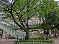 HK CWB HKCL tree 朴樹 Chinese Hackberry n escalators Nov-2013 02.JPG
