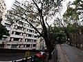 HK ML 半山區 Mid-levels 干德道 Conduit Road rain February 2020 SS2 03.jpg