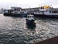 HK TST 尖沙咀 Tsim Sha Tsui 梳士巴利花園 Salisbury Garden 維多利亞港 Victoria Harbour March 2020 SSG 17.jpg