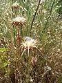 Hadassah Trail P1150447.JPG