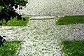 Hail storm 4.jpg