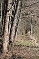 Hajnówka, Poland - panoramio (174).jpg